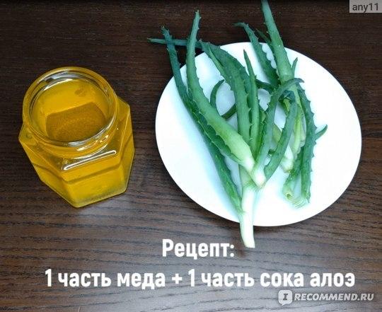 Алоэ при язве желудка: чем полезен, рецепты, лечение соком, отзывы