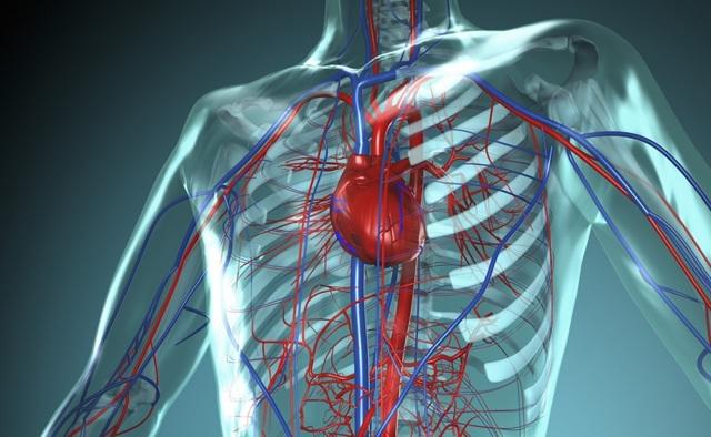 Сколько литров крови у человека (взрослом организме и у ребенка)