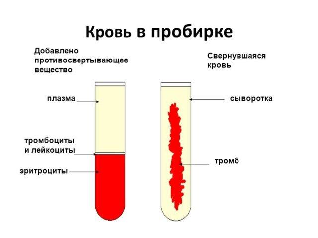 cыворотка крови: что это такое, как ее получить