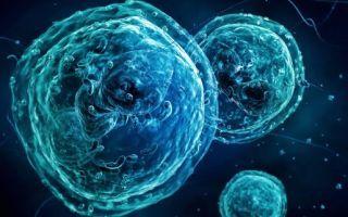 Базофилы повышены в крови у взрослого: что это значит, основные причины