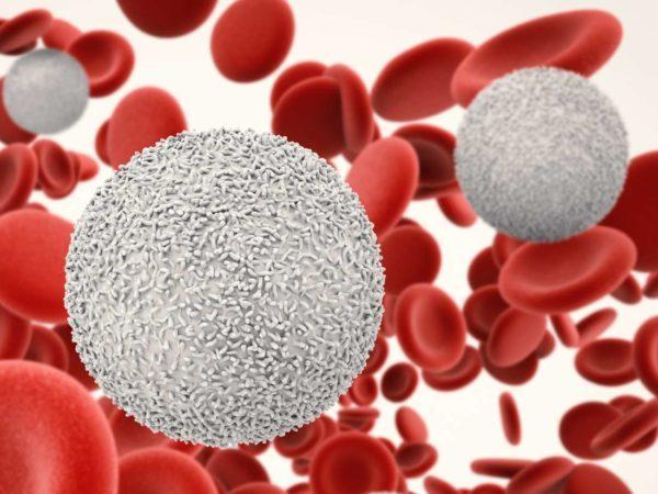 Чем и как поднять лейкоциты после химиотерапии: продукты и лекарства