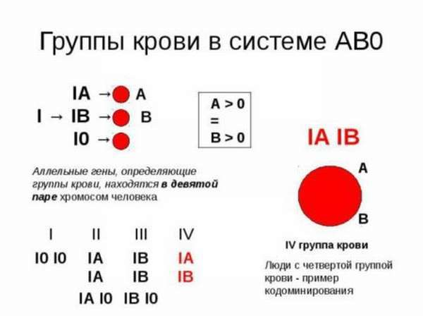 Группы крови человека: сколько существует, какие бывают и как обозначаются