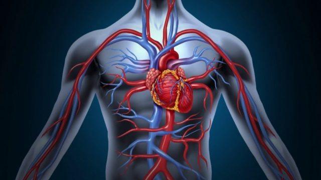 Уровень глюкозы в крови: норма содержания и ее определение