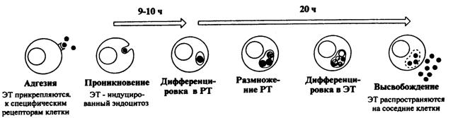 Хламидии в крови (в том числе при беременности и у ребенка)