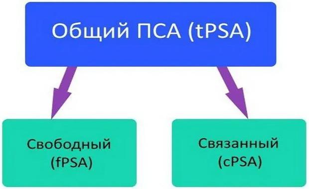 Уровень ПСА в крови: что это, подготовка к анализу и его расшифровка