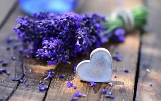 Травы для сердца и сосудов, лечебные свойства для головного мозга, сердечно-сосудистой системы