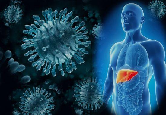 Анализ крови из вены: что показывает, виды (клинический, гормональный, биохимический)