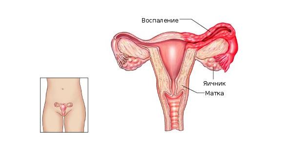 Функции матки