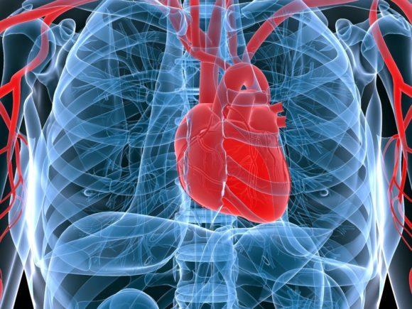 Тромб в сердце: симптомы и лечение, что делать, чтобы не оторвался