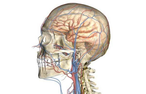 Церебральная ангиодистония (сосудов головного мозга): что это, признаки