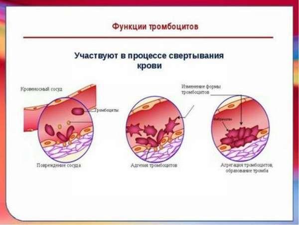 Тромбоциты по Фонио: как проводится подсчет, подготовка к анализу