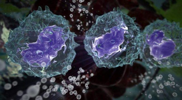 Почему повышены моноциты в крови: причины их высокого содержания