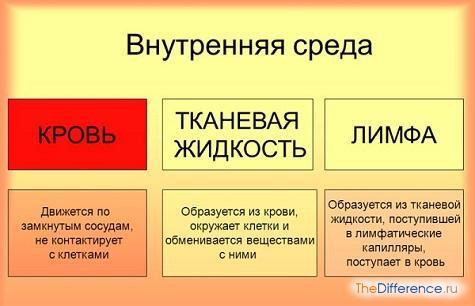 Чем кровь отличается от лимфы: основные отличия