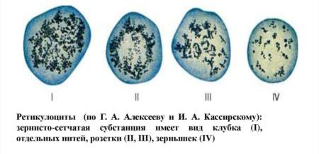 Ретикулоциты: норма, причины повышения, обозначение в анализе крови