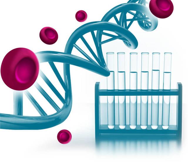 Гемостаз крови: что это такое, анализ на мутации и нарушения