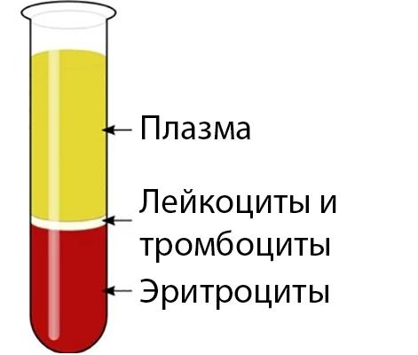 Гематокрит: норма у женщин, причины его повышения и понижения в крови