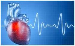 Аускультация сердца (точки выслушивания) в норме, пальпация и перкуссия