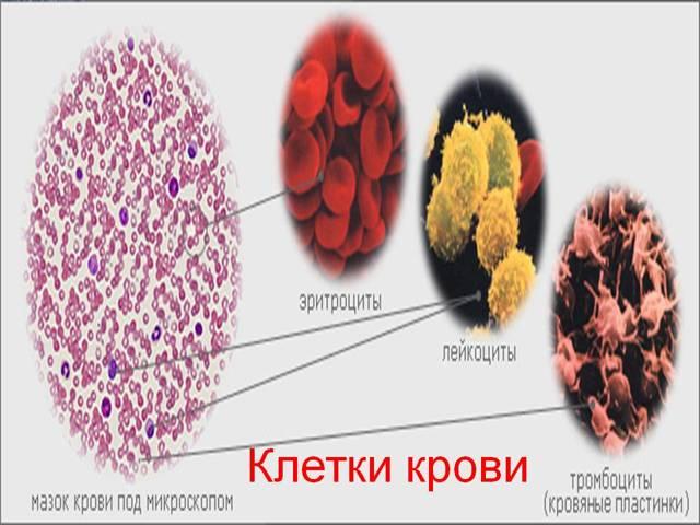 rdw в анализе крови: почему он повышен, расшифровка результатов