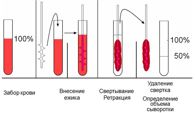 Время кровотечения по Дуке: норма, как определить, расшифровка результатов