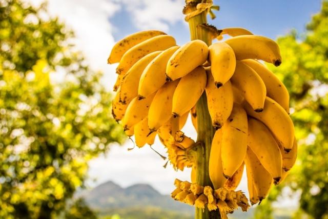 Банан на голодный желудок: можно ли, время переваривания, польза и вред