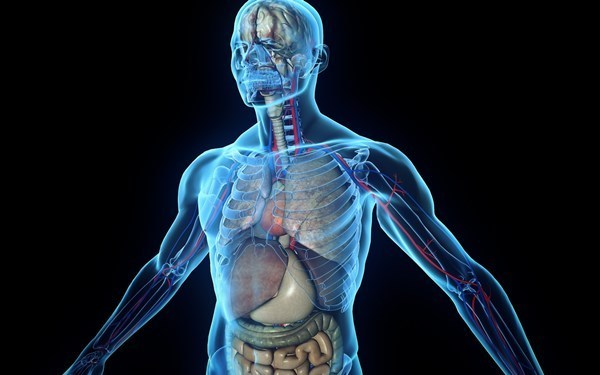 Железо в крови человека: норма, причины пониженного и повышенного уровня