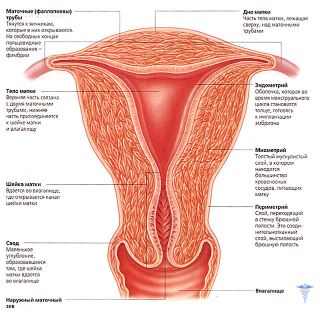 Симптомы и лечение кисты шейки матки