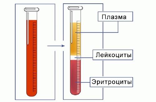 Анализ крови при раке желудка: показатели и их расшифровки, цены в клиниках