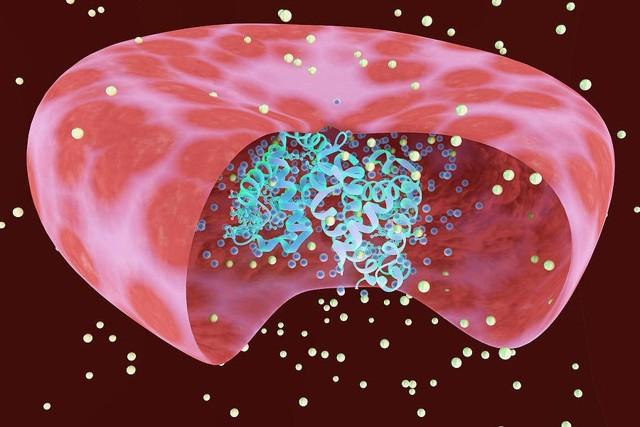 Эритроциты в гипотоническом растворе