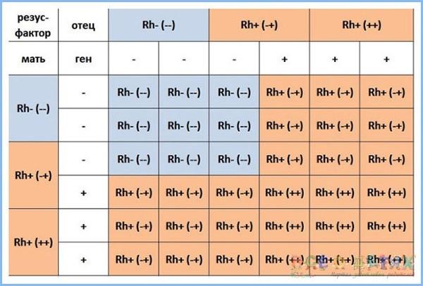 Группа крови детей и родителей: как определить ее и резус-фактор