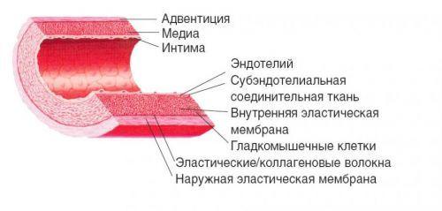УЗДГ брахиоцефальных сосудов и артерий: показания, преимущества