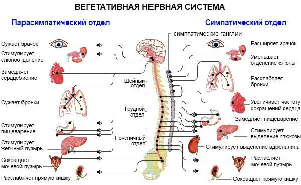 Вегето-сосудистая дистония (ВСД) по смешанному типу: симптомы, лечение, причины и признаки