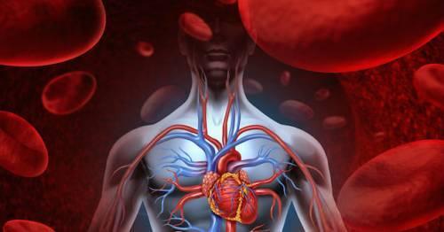 Гипопластическая анемия: причины, симптомы, лечение и диагностика