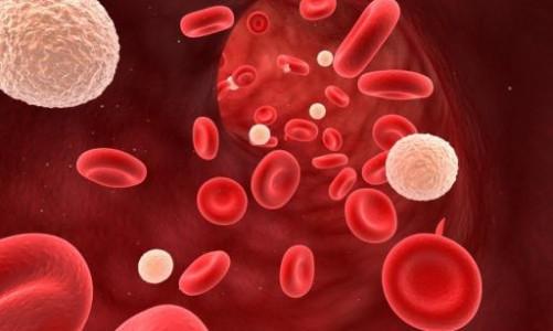 Средний объем эритроцитов (mcv) в анализе крови, расшифровка и норма
